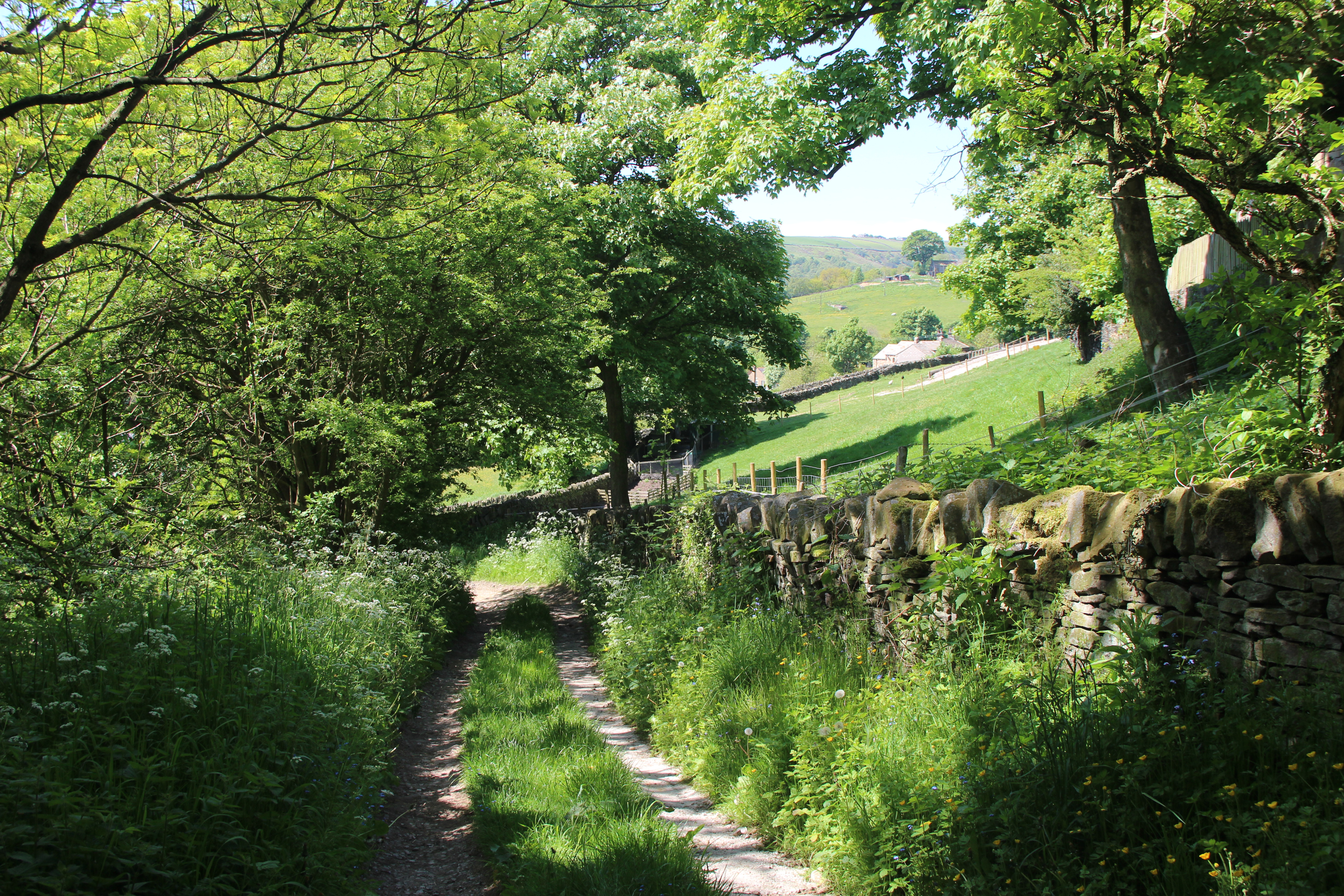 Footpath to North Beck